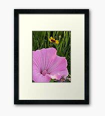 A Study in Pink and Gold Framed Print