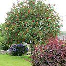 Rowan Tree by lezvee