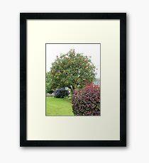 Rowan Tree Framed Print