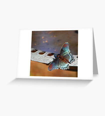 Butterfly Bath Greeting Card