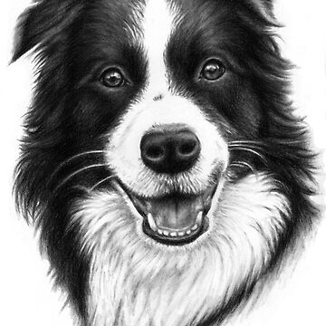 Border Collie by ArtsandDogs
