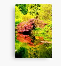 Acer Reflection Canvas Print