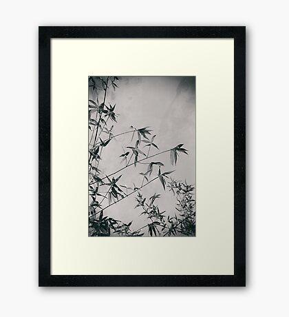Fragility & Strength Framed Print