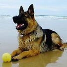 Mr Max at the Beach by Gabrielle  Lees