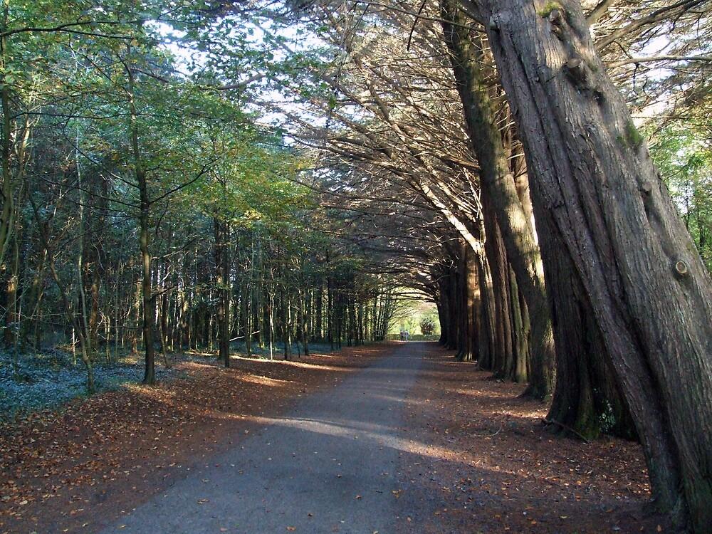 Irish forest by John Quinn