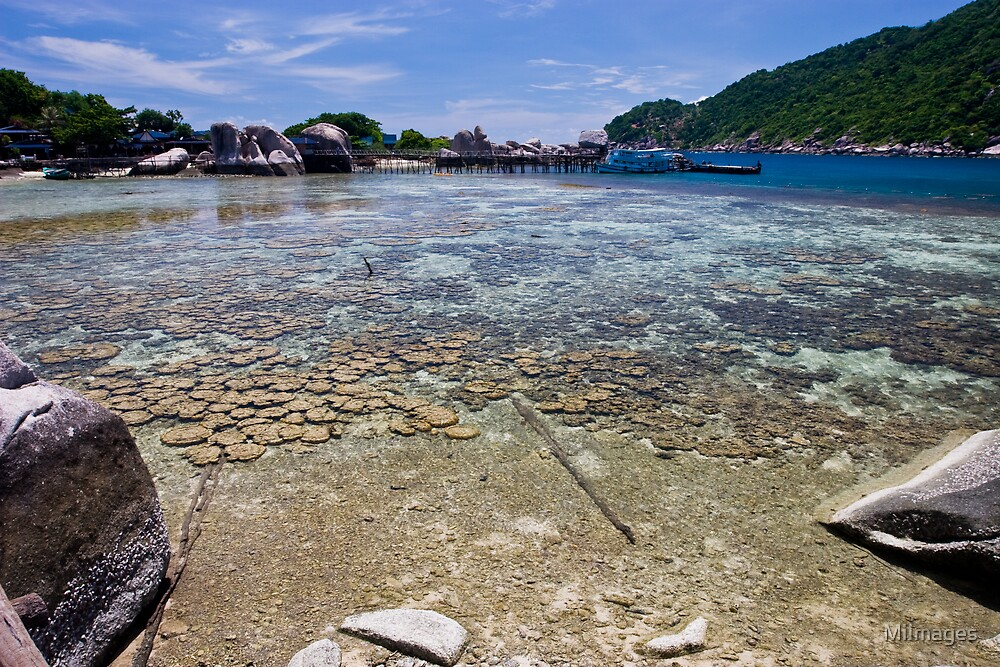 Corals of Koh nangyuan by MiImages