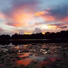 Lily Pad Sunset by Lindsay Merwin