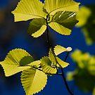 Yellow by Catherine Davis
