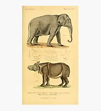 The Animal Kingdom by Georges Cuvier, PA Latreille, and Henry McMurtrie 1834 620 - Mammalia Mammals Photographic Print