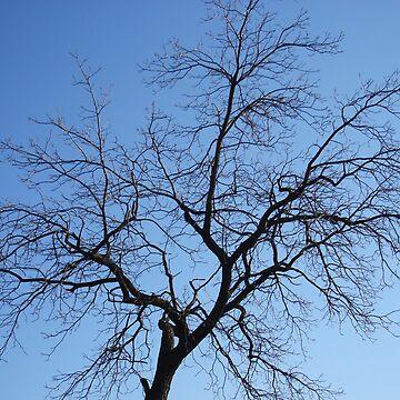 Crazy Tree by Marmadas