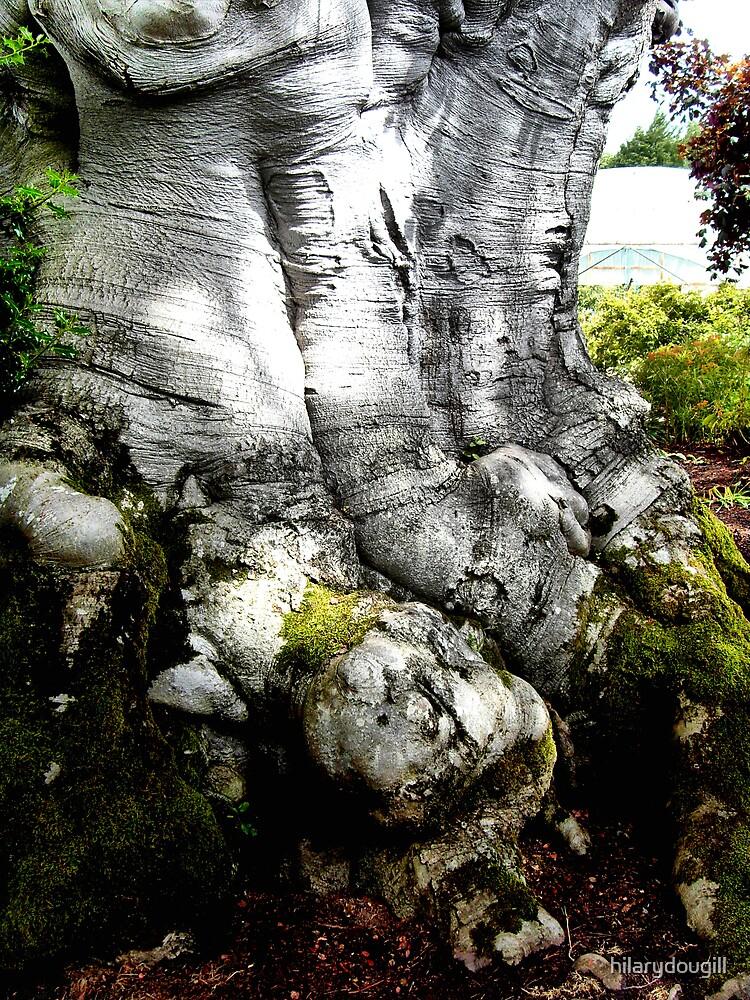 Base of the Elephant tree. by hilarydougill