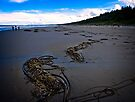 North Beach Haida Gwaii by Yukondick