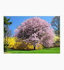 Blooming Trees Photographic Print
