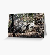 Escaping Racoon Greeting Card