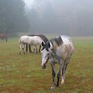 horses, fog by fauselr
