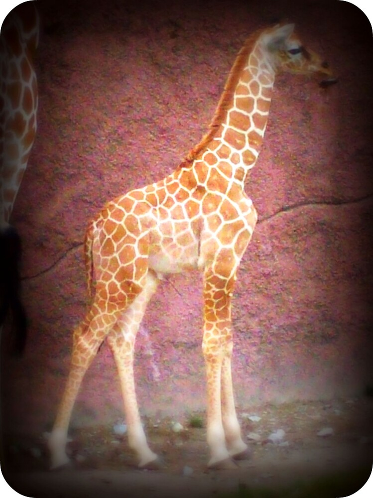 Giraffes Can't Dance by Lindsey James