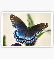 Gorgeous Natural Animal Print - Beautiful Blue Butterfly Sticker