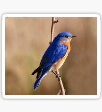 Beautiful Blue Bird Sticker