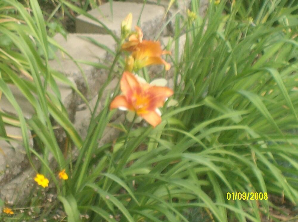 O...Flower by mooka7