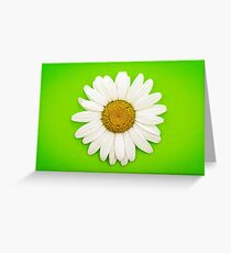 White Daisy on Green Greeting Card