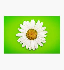 White Daisy on Green Photographic Print