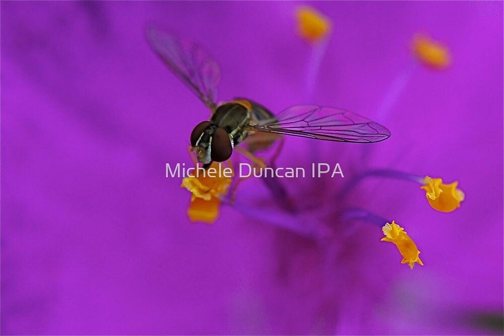 My little friend by Michele Duncan IPA