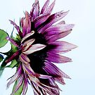 Single Flower. by Forfarlass