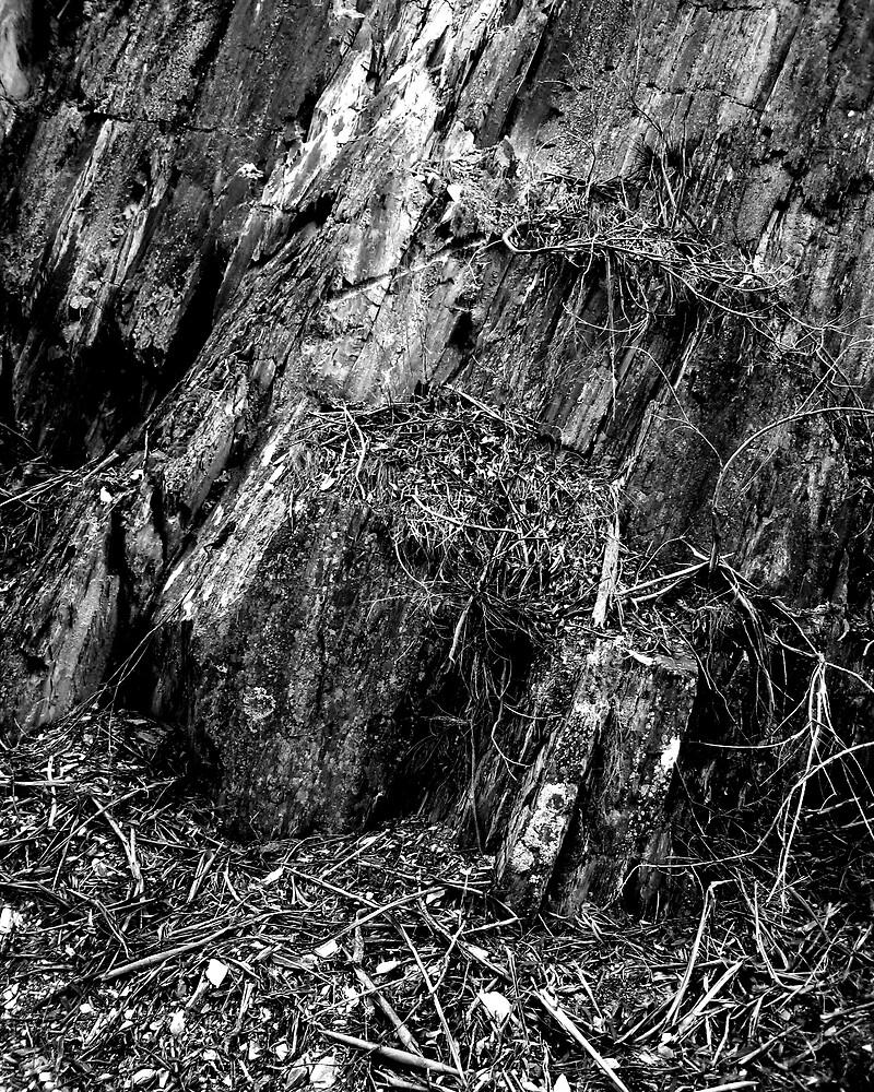 Rocks by Daz Zammit