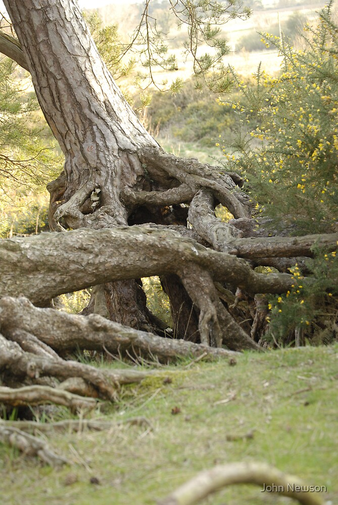 Tree Roots by John Newson