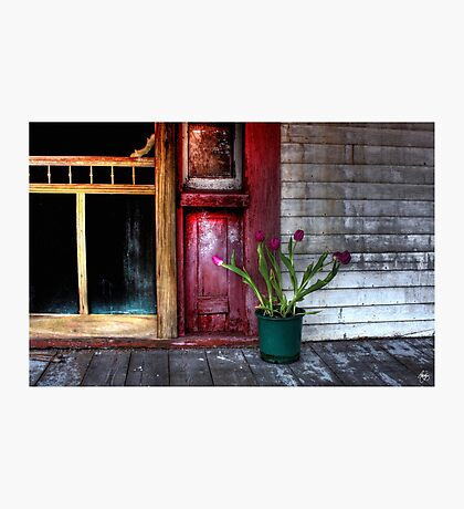 Hope Writ in Tulips Photographic Print