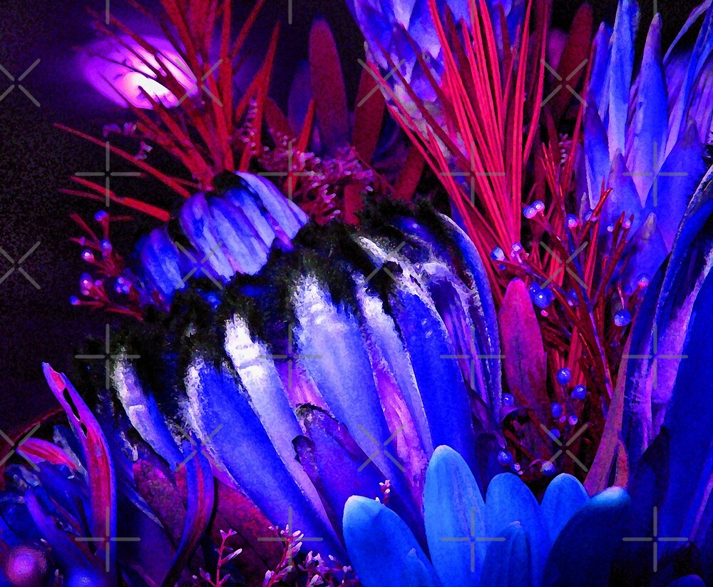 Protea Blue by haymelter