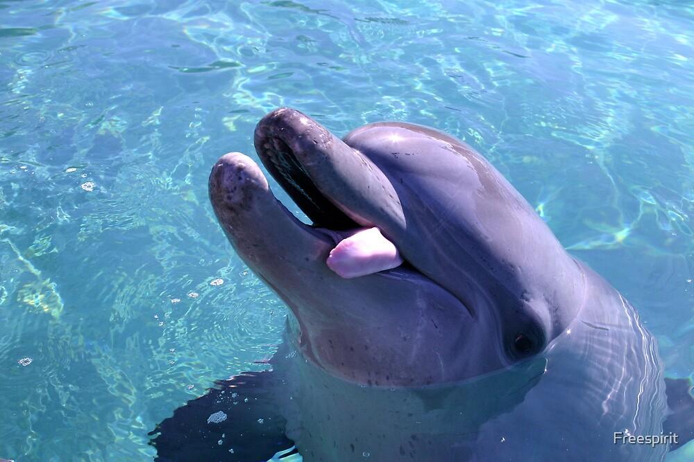 Cheeky Dolphin by Freespirit