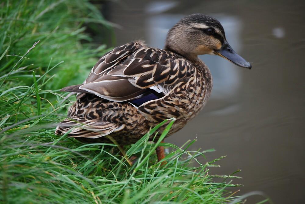 duck by ampwizbit