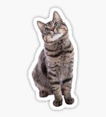 Pegatina Gato atigrado