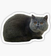 Cat sticker Sticker