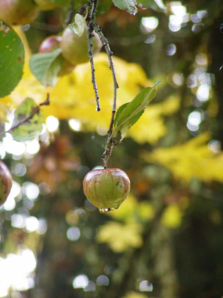 Autumn Sun rays #9, raindrops on apple by Dawna Morton