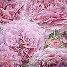 Romantic Roses - Romantic Roses by Martina Cross