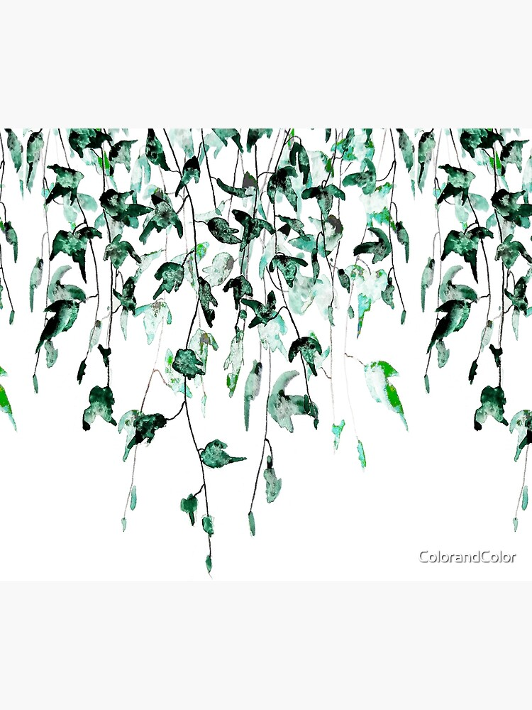 Ivy on the wall  by ColorandColor