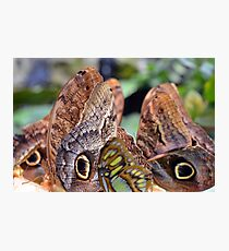 Many colorful butterfly wings  Photographic Print