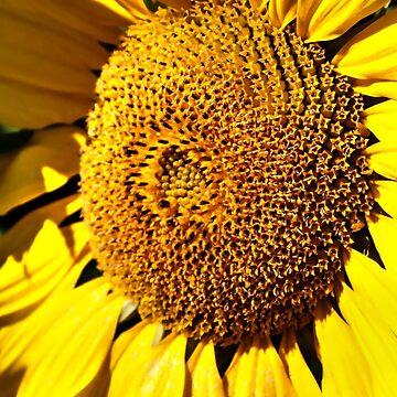 Sunflower by Focal-Art