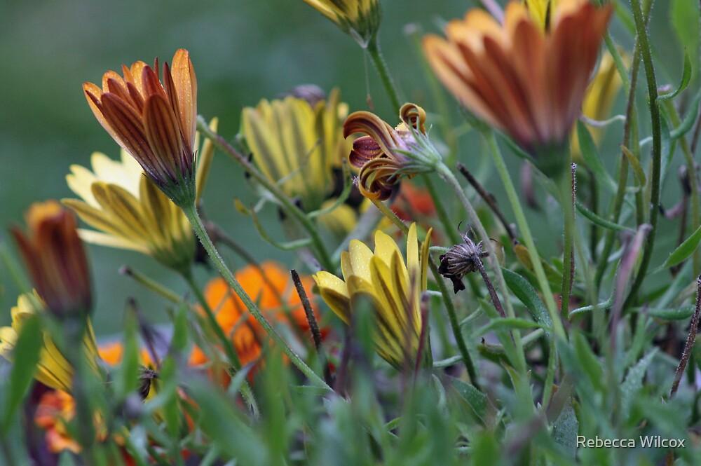 In The Garden by Rebecca Brann