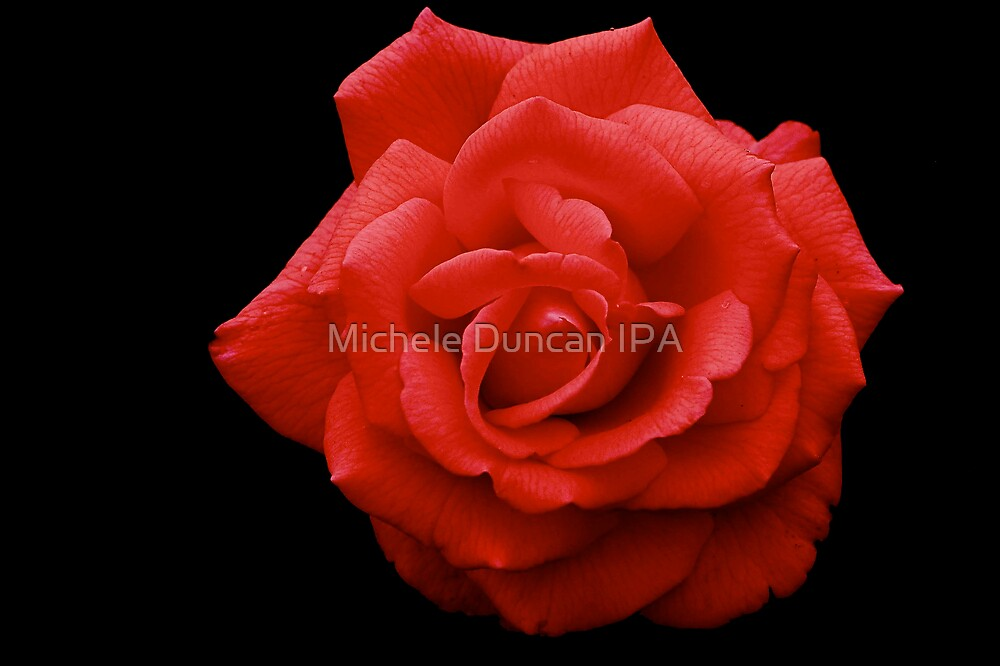 Lipstick Red by Michele Duncan IPA
