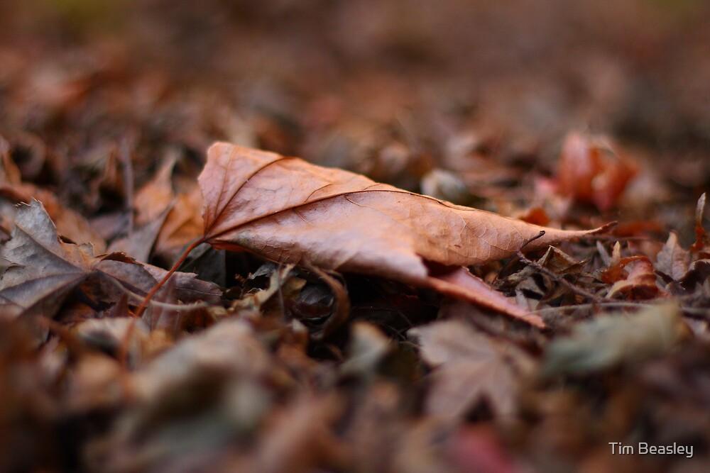 Final Fall by Tim Beasley