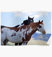 Painted Horses Poster