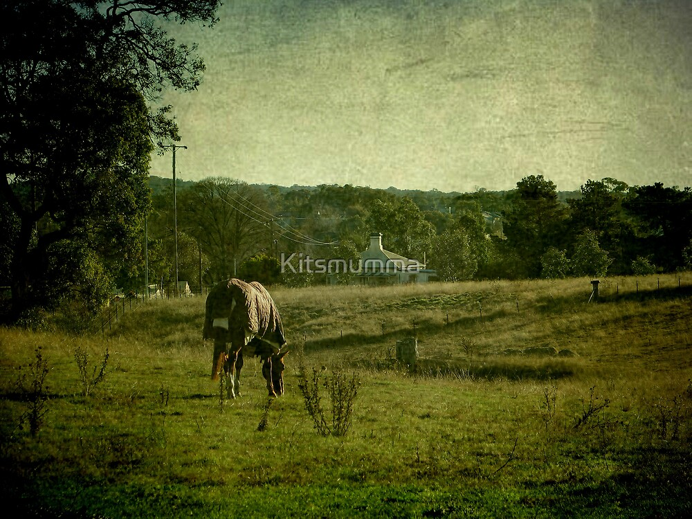 Grazing - Uralla, Northern Tablelands, NSW, Australia by Kitsmumma