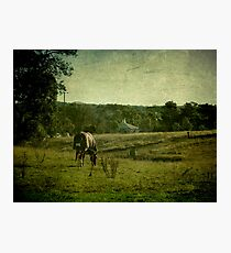 Grazing - Uralla, Northern Tablelands, NSW, Australia Photographic Print