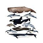 «Ballenas, delfines, orcas y cachalotes» de Chloé Yzoard