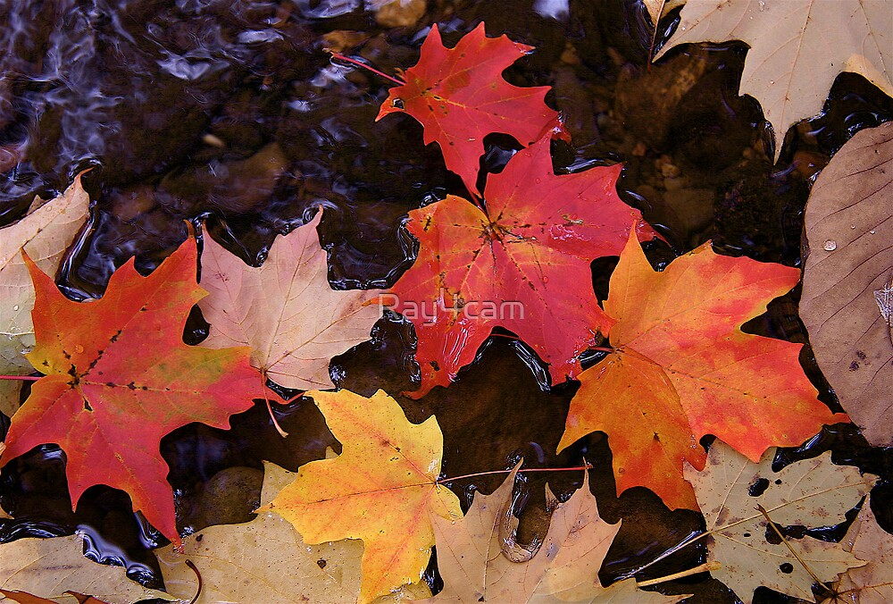 Leaves in a  Stream by Ray4cam