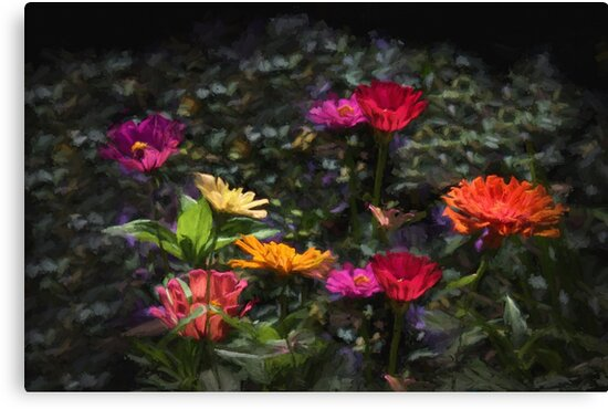 Zinna Color Explosion by wcpadgett