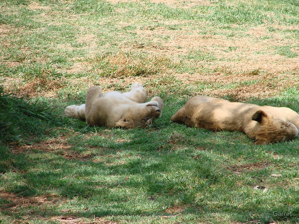 Lion Cubs by Garret